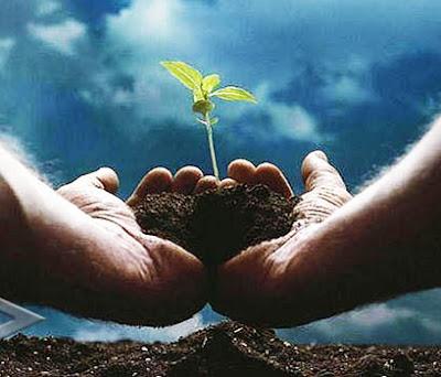 Cara Mengatasi Pemanasan Global Dengan Menanam Pohon