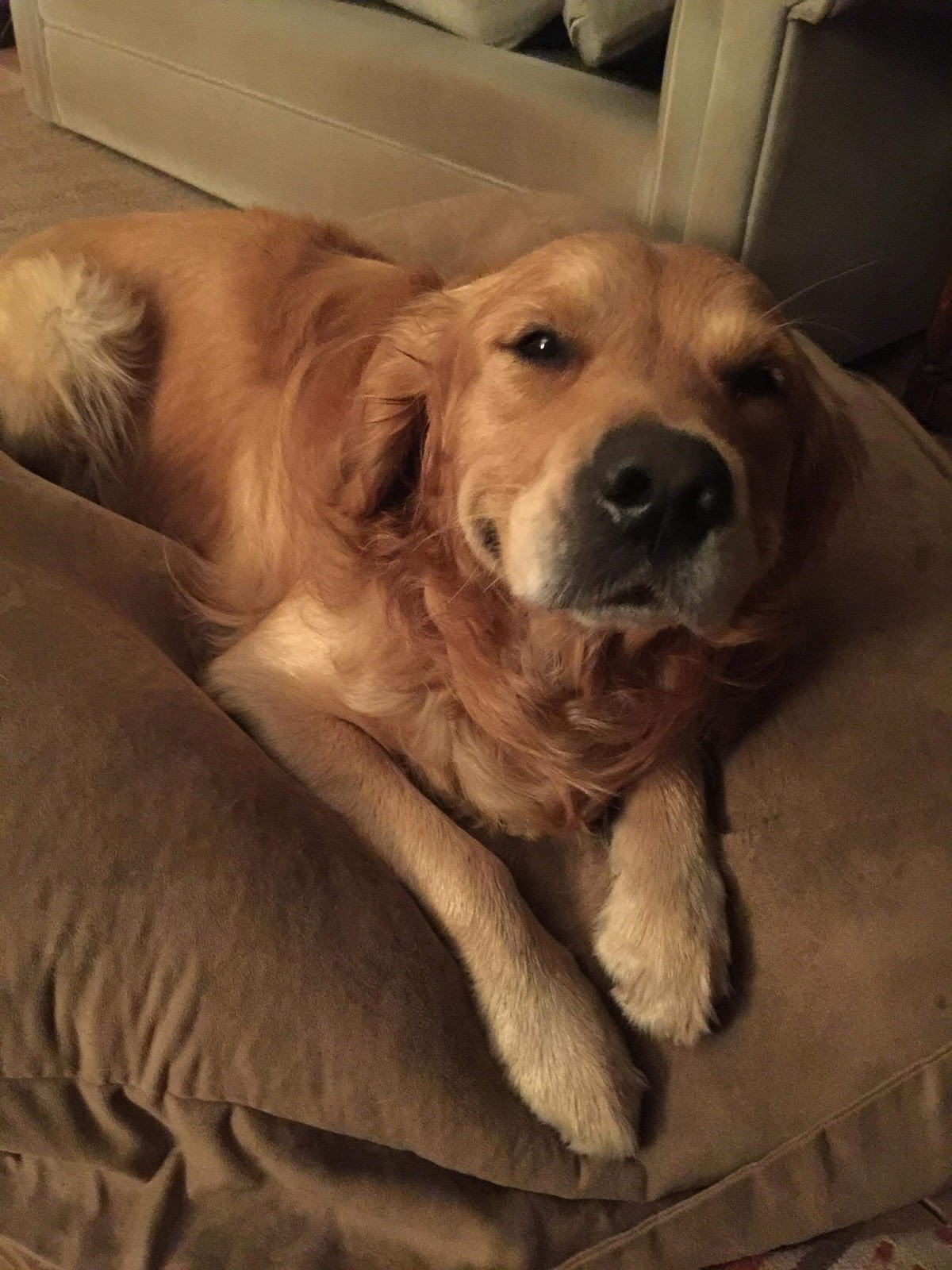 Cute dogs - part 150, best cute dog photos, dog pictures, adorable dog