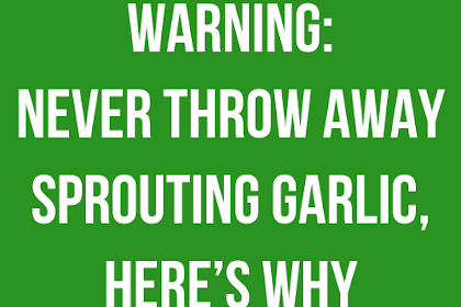Warning: Never Throw Away Sprouting Garlic, Here's Why