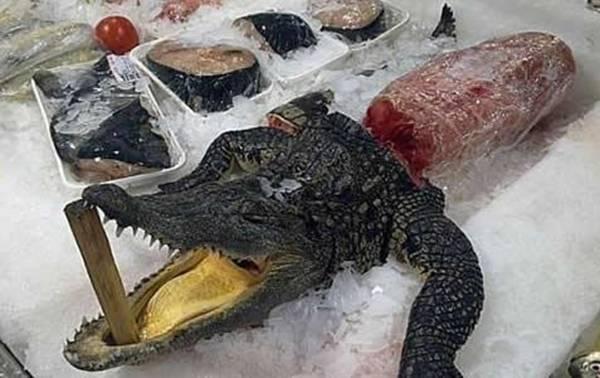 فوائد لحم التمساح كنج كونج 12