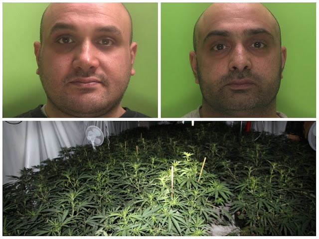 OH BROTHER! Duo jailed for role in cannabis factory with potential £3.5 million yield