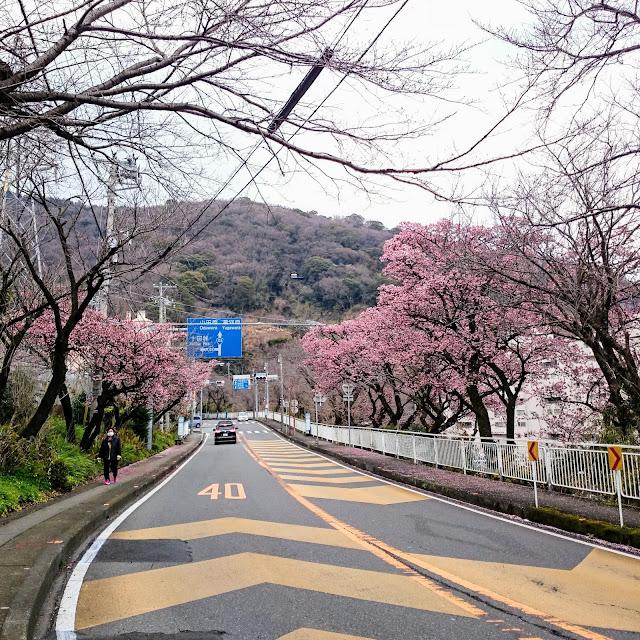 国道135号 伊豆山