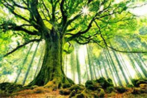 Irish Symbols - Tree of Life