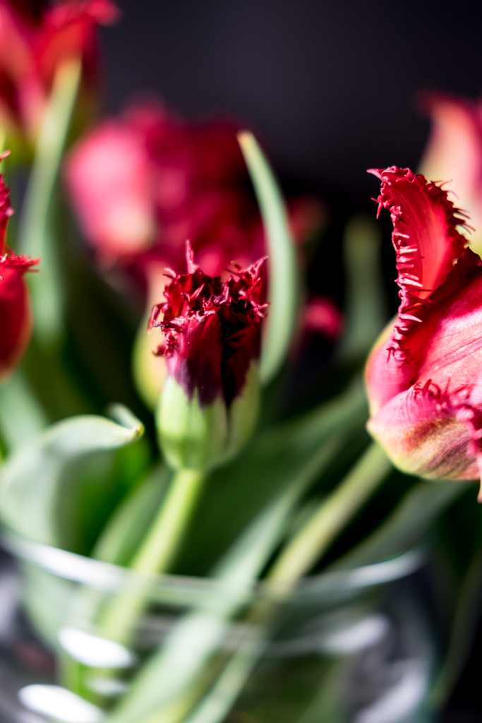 fim.works | Lifestyle Blog | dunkelrote Tulpen, Fransentulpen, Floristik, Blumen