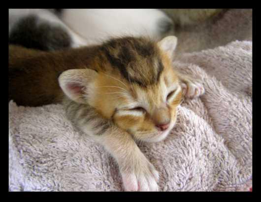 Bisnis Santai Hasil Maksimal, Bahkan Doyan Tidur Dilakuin