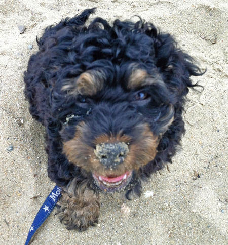 Rottweiler 9 Rottweiler Mixes You Need To Check Out