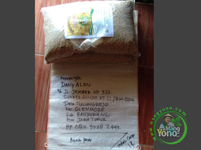Benih pesanan DANY ALAN Banyuwangi, Jatim   (Sebelum Packing)
