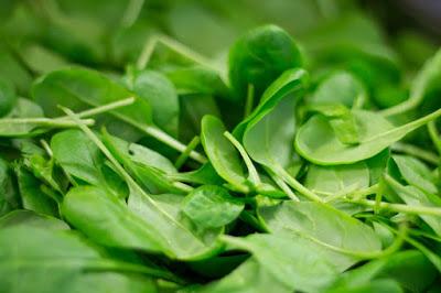 bayam, bahaya bayam, budidaya bayam, jenis bayam, pengertian bayam, kandungan bayam, manfaat bayam hijau, amaranthus tricolor, ciri ciri bayam, manfaat bayam dan bahayanya, efek samping bayam, bahaya bayam, manfaat sayur bayam merah, manfaat sayur kangkung, manfaat sayur wortel, manfaat bayam untuk diet, kandungan bayam, kandungan sayur kangkung, tabel kandungan gizi bayam, vitamin pada bayam, kandungan kimia bayam, kandungan dan manfaat sawi, produk olahan pangan bayam, produk olahan bayam, kandungan gizi bayam pdf,  Manfaat mengkonsumsi daun bayam dan bahayanya