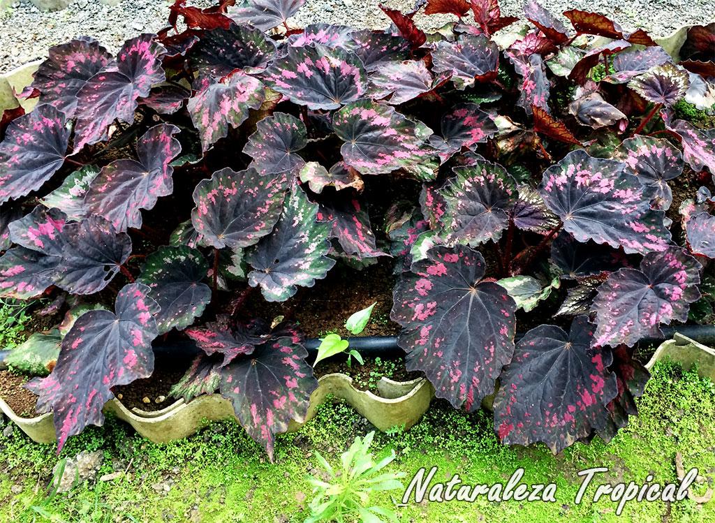 Naturaleza tropical conoce las plantas m s populares for Una planta ornamental