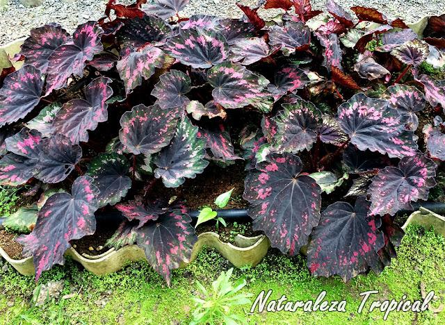 naturaleza tropical conoce las plantas m s populares