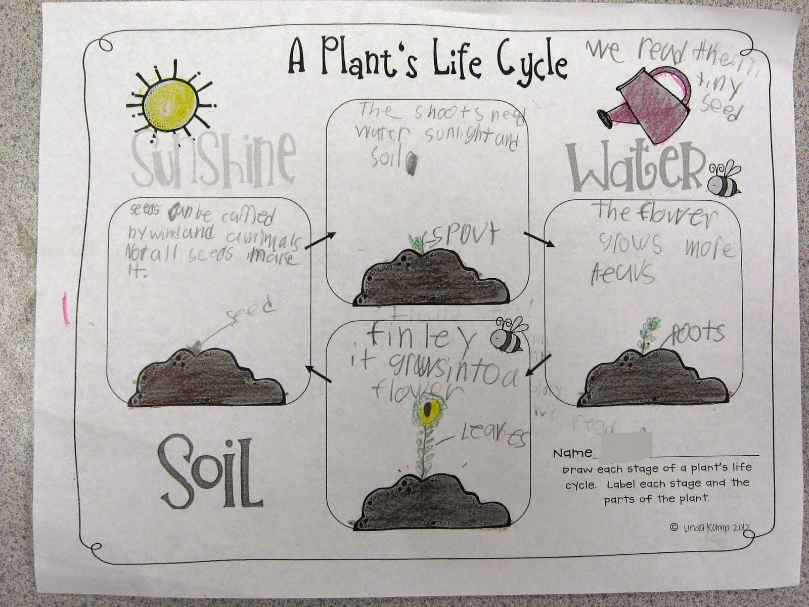 Corn Plant Life Cycle Diagram Animal Cell Without Labels Labeled Bean Seed Of A Monocot