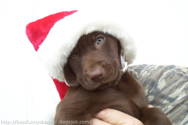Cute And Funny Pictures Of Animals 56 Christmas 8