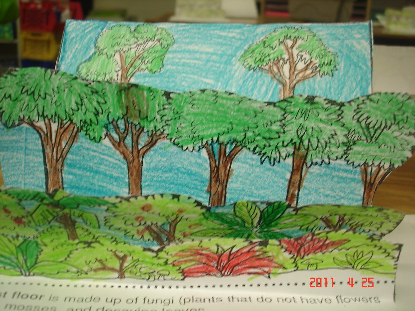 Homework help rainforests
