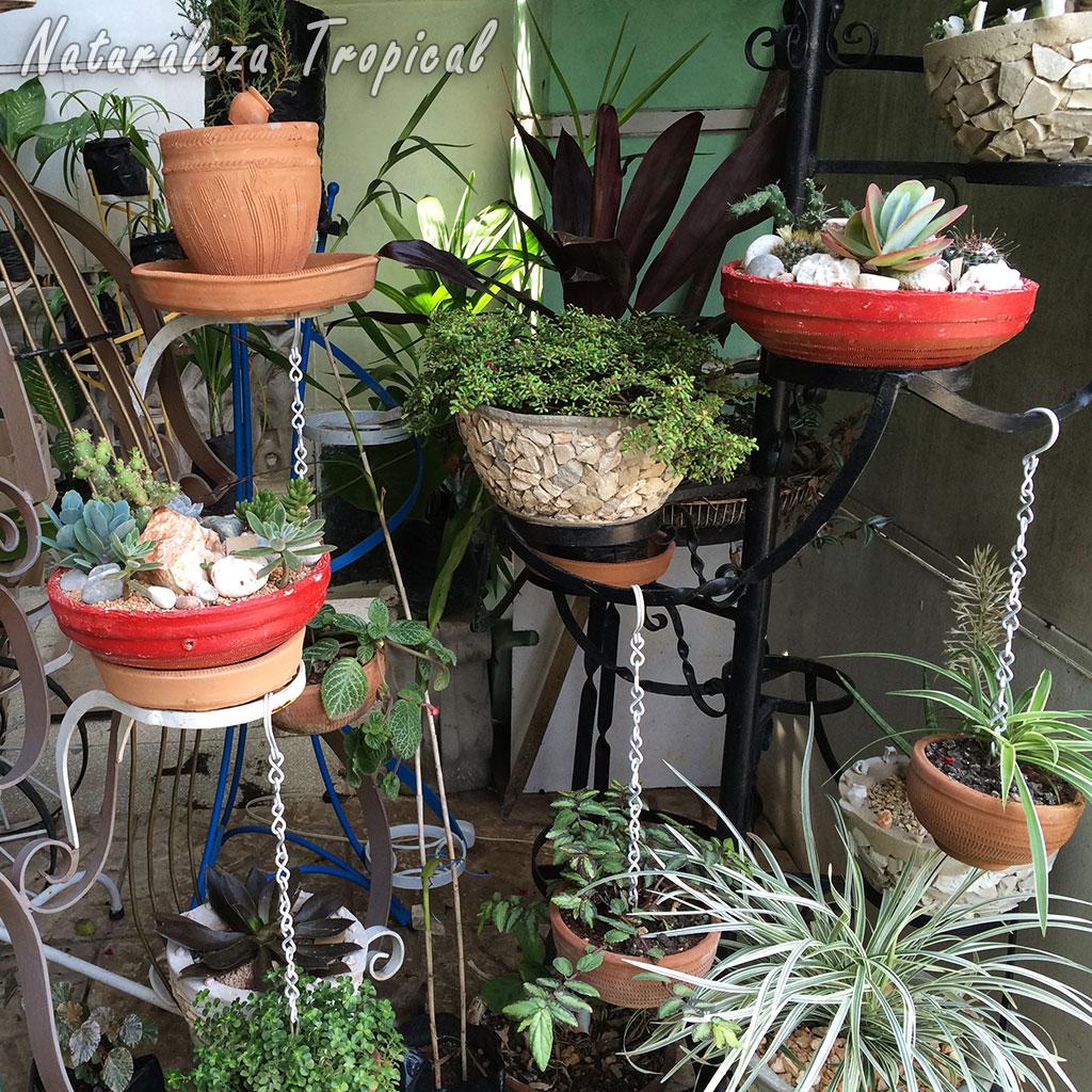 Naturaleza tropical trucos que debes tener en cuenta si for Jardin vertical materiales
