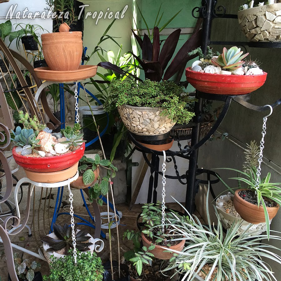 Jardín vertical adornando un jardín