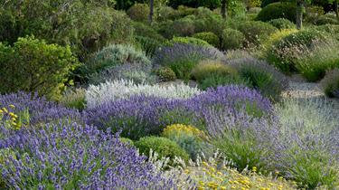 Jardinería sostenible. Combinaciones de plantas mediterráneas para jardín seco (sin casi riego)