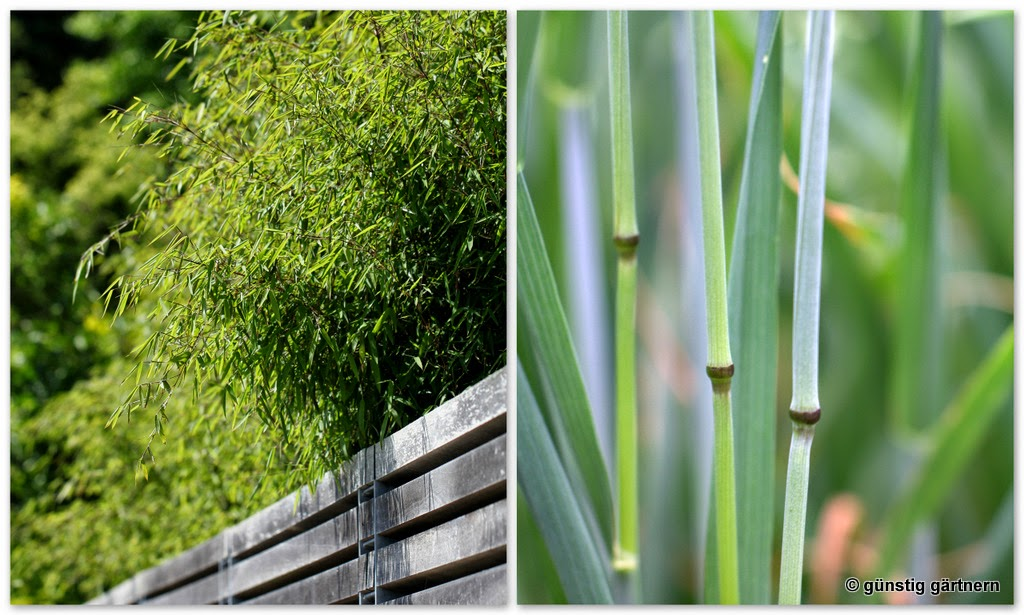 g nstig g rtnern steckspiele mit bambus. Black Bedroom Furniture Sets. Home Design Ideas