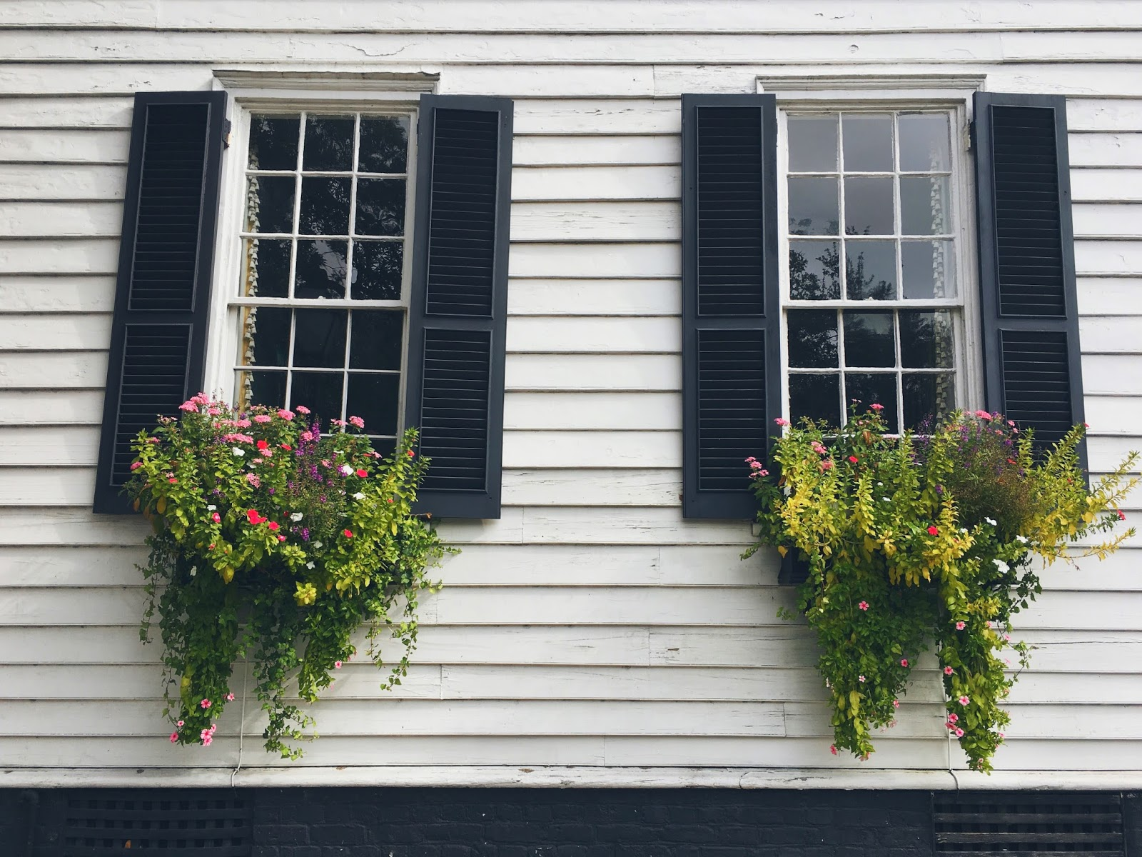 charleston-sc-windowboxes