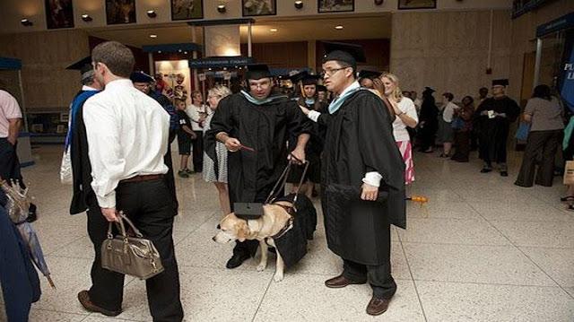Chú chó hiếu học đi cùng chủ nhân tới nhận bằng thạc sĩ