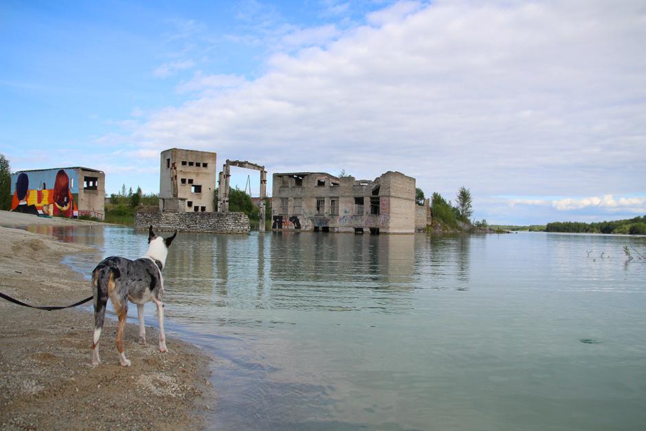 Koiran kanssa matkalla: Viro sopii lemmikin kanssa reissaavalle | Muistoja matkoilta -matkablogi