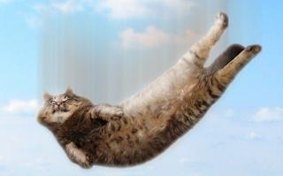 Ini Alasan Kenapa Kucing Bisa Selamat Meski Jatuh dari Tempat Tinggi