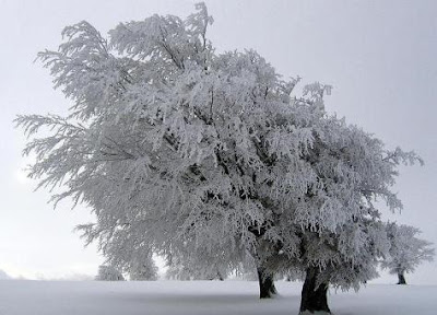 Foto de nieve invadiendo la naturaleza