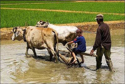 garu Alat-alat Pertanian