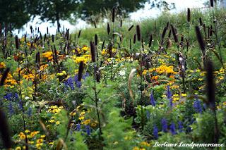 Sommerblumen IGA