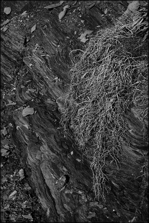 fotografia,naturaleza,esquistos,arbusto,calblanque,murcia