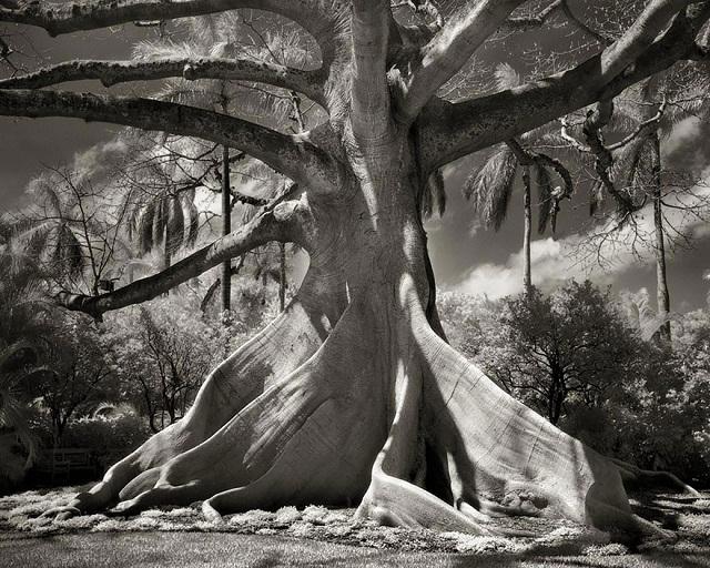 Seorang Wanita yang Menghabiskan waktu 14 Tahun Mengambil Foto Pohon Tertua di Dunia