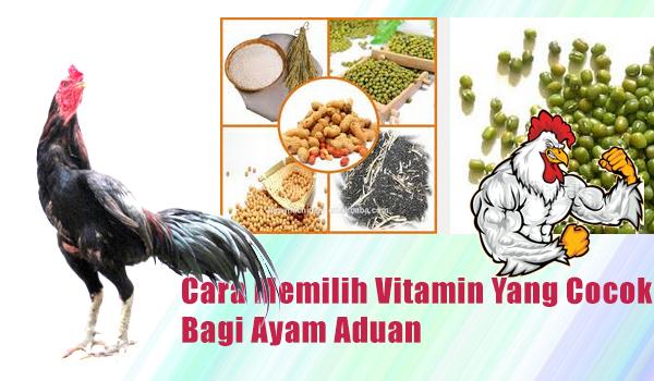 Cara Memilih Vitamin Yang Cocok Bagi Ayam Aduan