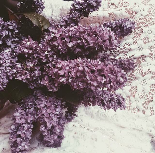 lilacs-lace