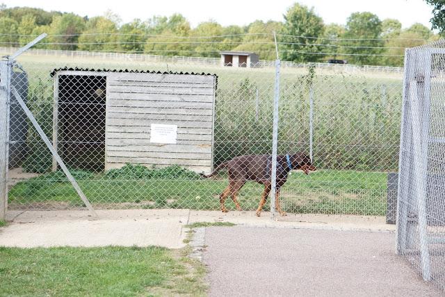 保護犬 ドッグラン