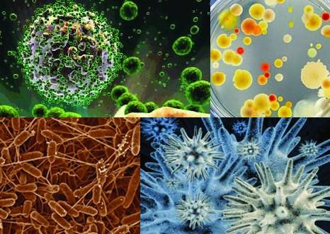 mikro organisme