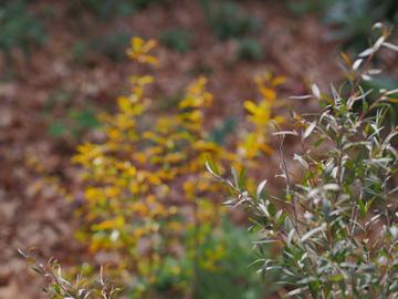 Flora And Fauna In My Un Trendy Autumn Garden