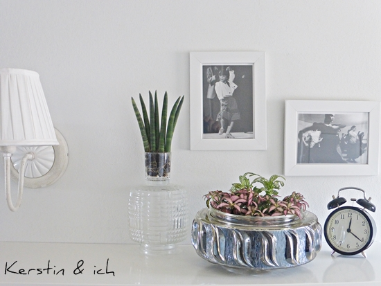 Upcycling: Pflanzen in Szene gesetzt mit Schwarz-Weiß-Fotos und Glas