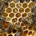 Μελισσοκομία: Έρχονται ενισχύσεις ύψους 4,64 εκατ. ευρώ