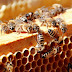 Οι μέλισσες κρύβουν «μυστικά» λειτουργίας του ανθρώπινου εγκεφάλου