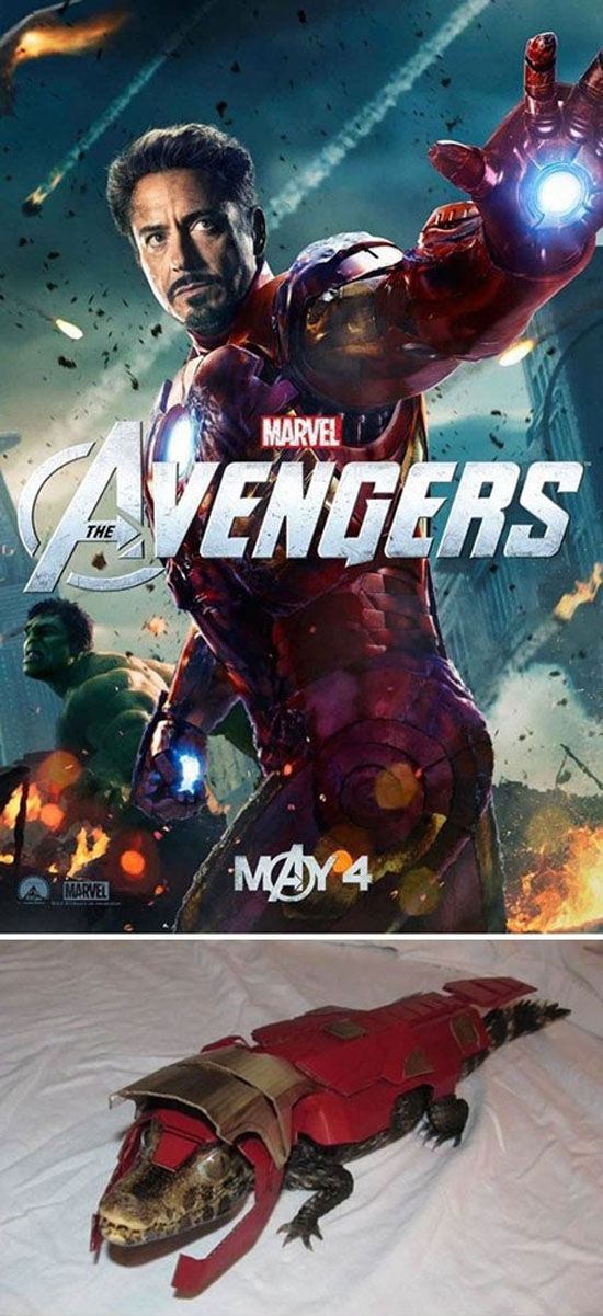 Funny Cool Pictures Avengers Pets