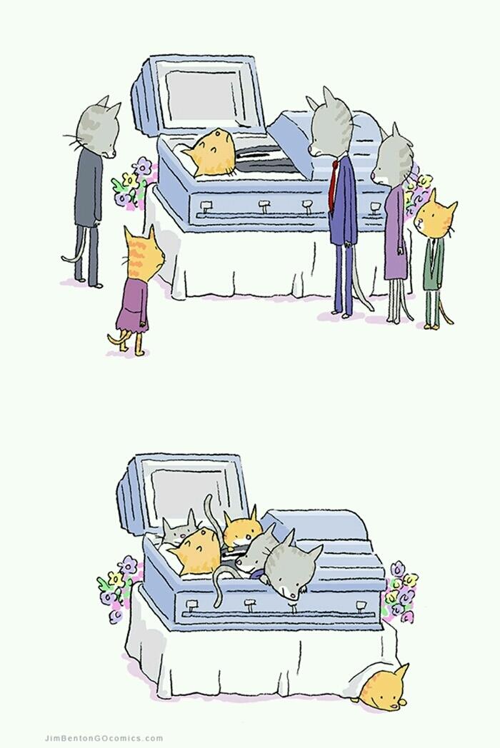 Funny Cat Funeral Coffin Cartoon Joke Picture