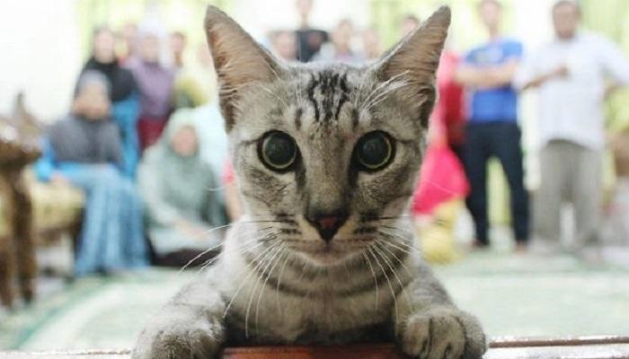 15 Foto Ini Jadi Rusak karena Kucing yang Caper Banget