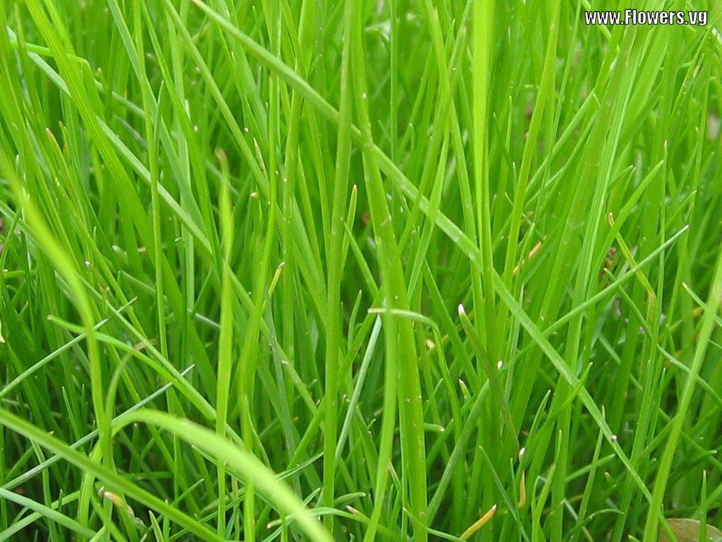 Salish Sea Communications Watching The Grass Grow