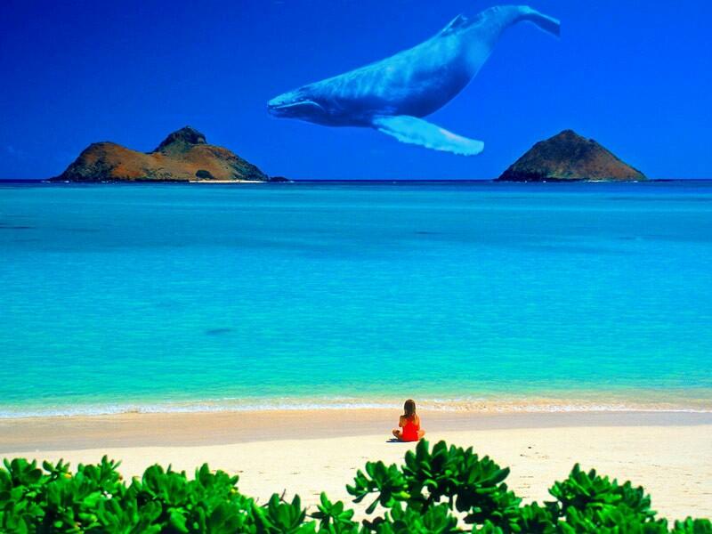 ... foto foto editan baru sob yakni foto dengan editan ikan paus yang ada