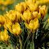 सर्दियों के सबसे अच्छे फूलों के पौधे ||Top Winter Flowers Plants