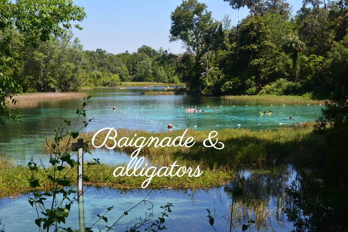 rainbow springs baignade avec les alligators