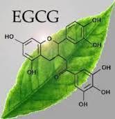epigallocatechin-3-gallate EGCG