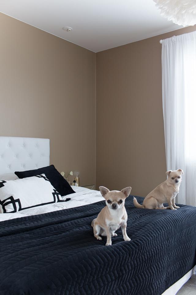 Villa H, chihuahua, koirat, makuuhuoneen sisustus, klassinen makuuhuone