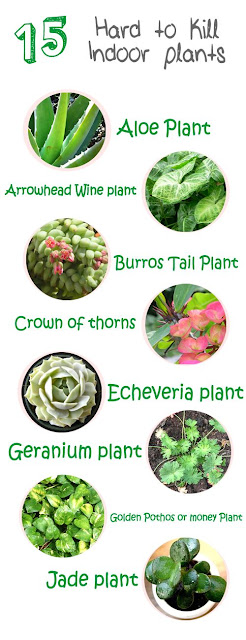 Green plants, I love them but they don't always love me.  I hope I can find something that will grow in my house from this list.