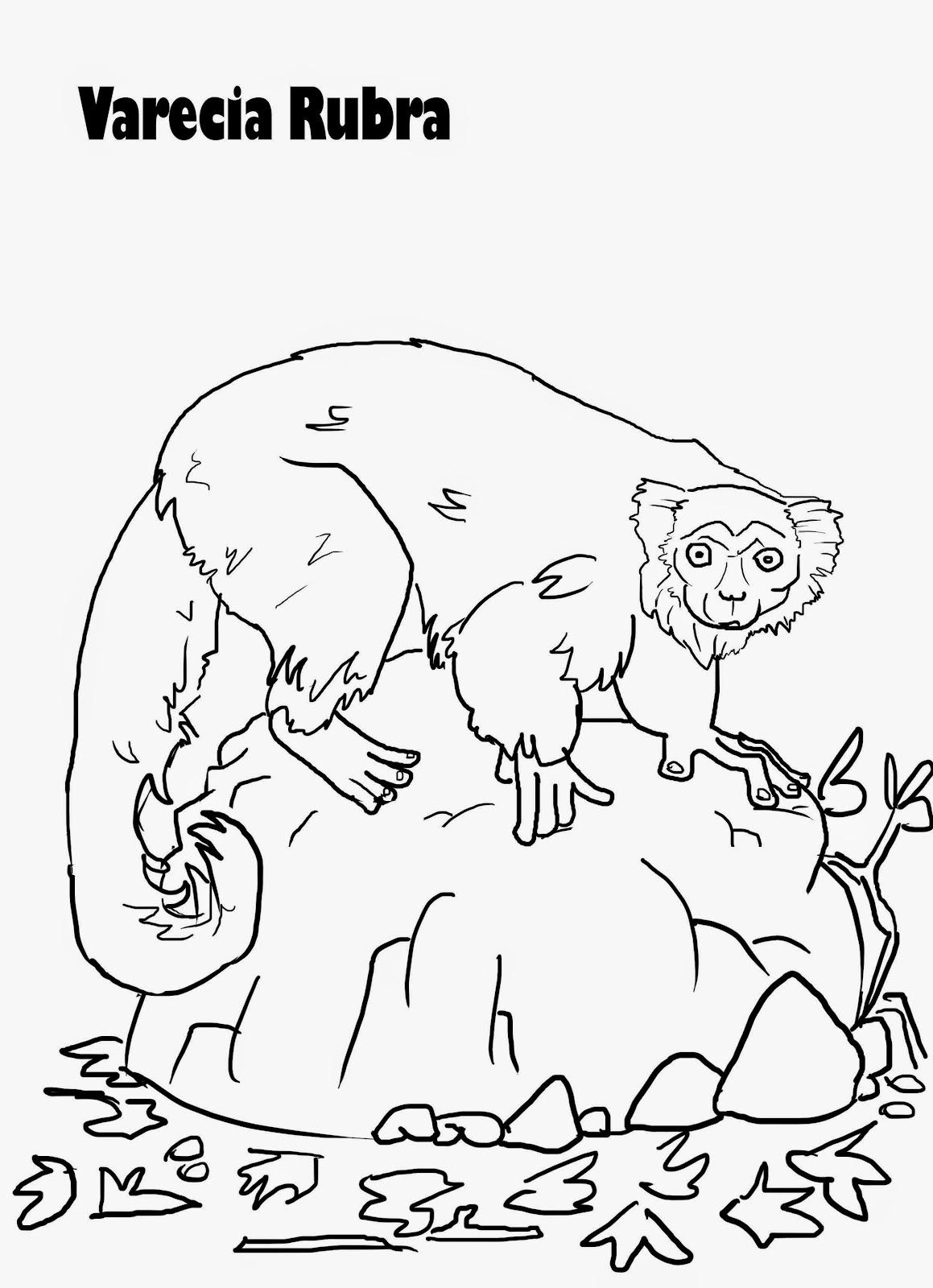 Lemur En Dibujo