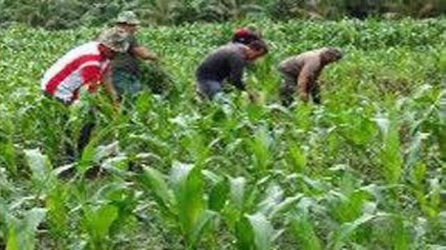 Babinsa Koramil 04/Biru Biru Berperan Penting Bantu Petani di Desa Sidomulyo